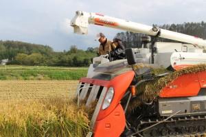 ②コンバインに乗って収穫体験